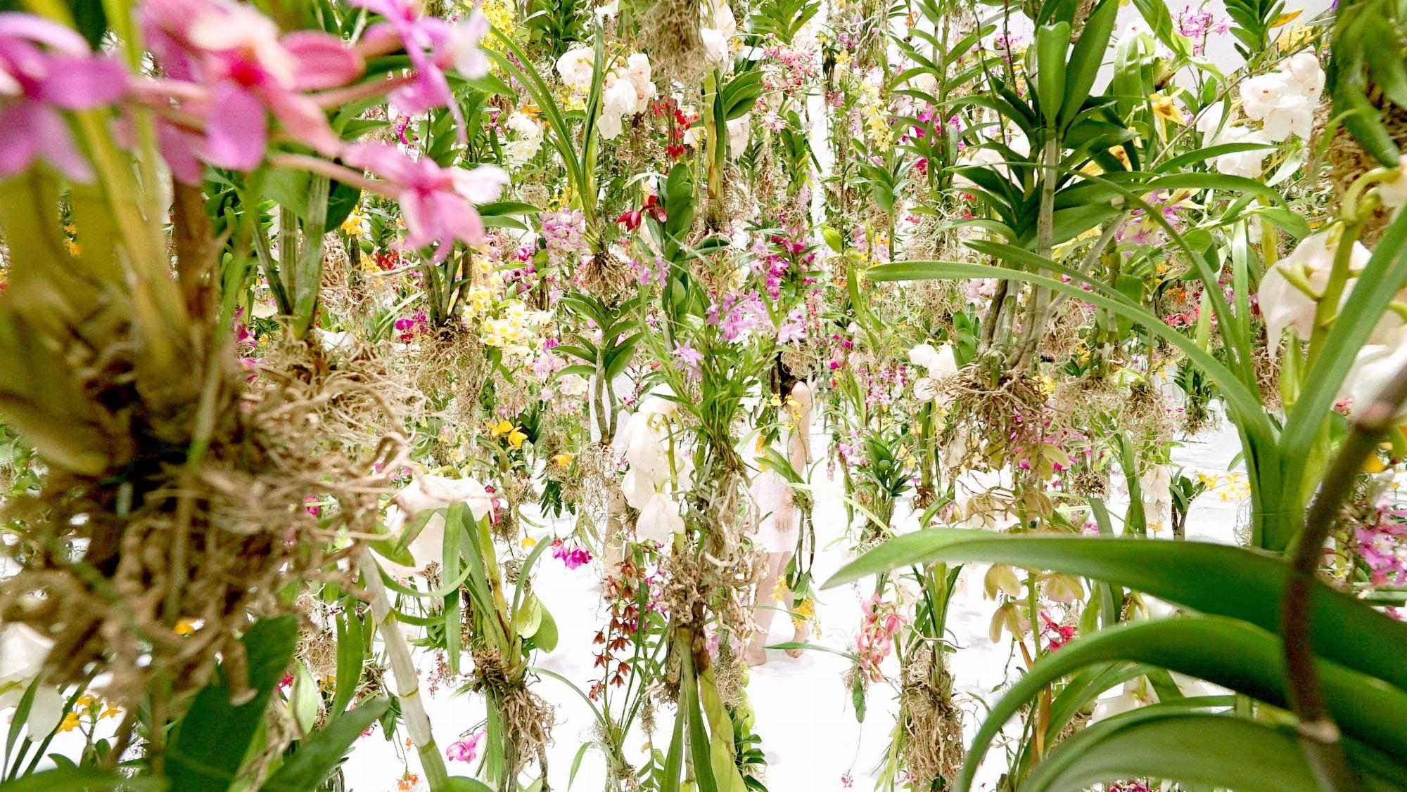 garden design garden design with top winter bloomers for your